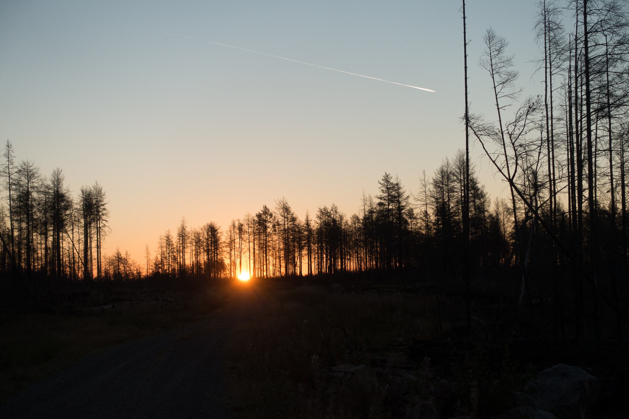 Hälleskog-Morgon2