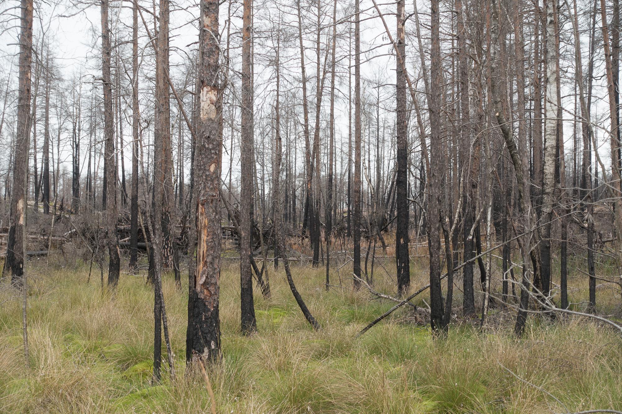 Hälleskog-NyGräs