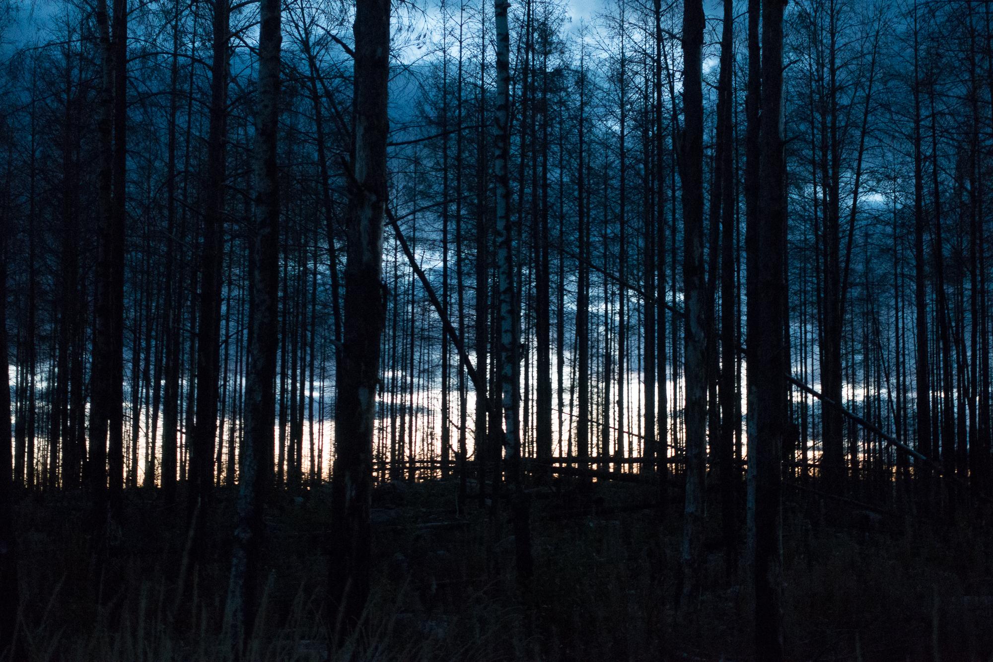 Hälleskog-Skymning1