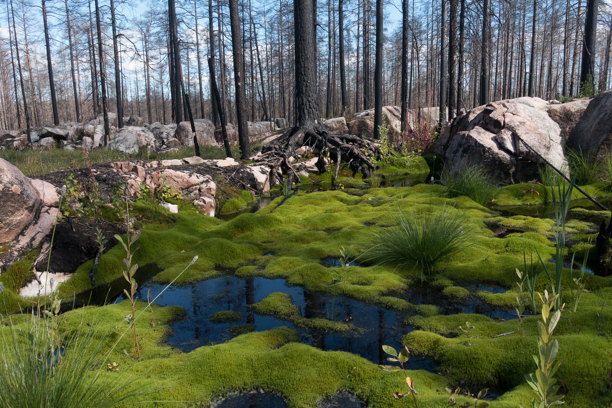 Hälleskog-Sten och Stam5